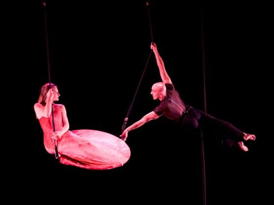 Danseurs suspendus à des agrès (hoop, show, dance)